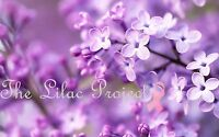 Lilac Day!!