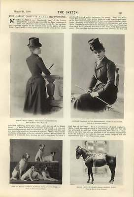 1900 Mlle Milly Capell Famous Equestrienne Sporting Dogs Fox Terriers