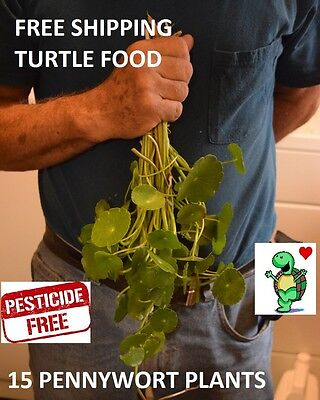 15 Pennywort Stems  Live Plants Turtle Herp Food Organic No Chemicals