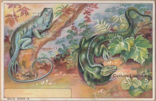 Victorian Trade Card-Mikado Laundry Soap-Iguana-Cyclura Lophorina
