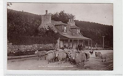 ON THE BRAEMAR ROAD AT COILLECRIECH: Aberdeenshire postcard (C25723)