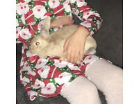 (Now rehomed thank u)7 month old female rabbit with indoor cage and accessories