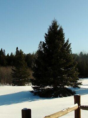 Snowed-In-Up-North