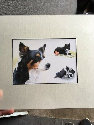 "(Border Collie Mum & puppy print by Joanne Bingham, mounted 10 X 12"")"