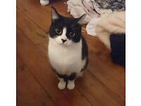 2 year old female cat