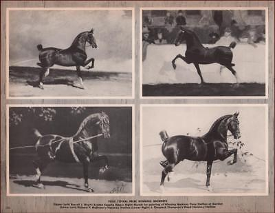 hackney horse for sale  Sparks