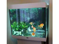 200l Juwel Lido Aquarium with healthy fish and full accessories