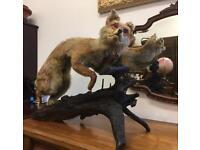 Vintage taxidermy Fox