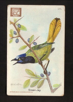 Green Jay  1922 Church   Dwight  Useful Birds Of America Card