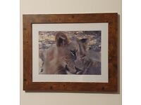 Wall Art Wildlife Framed Photography Prints Home Decor NEW (free postage)