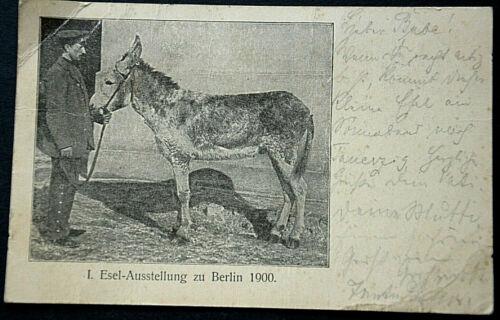 48288 Ak Donkey Animals 1. Eselausstellung For Berlin 1900 With Mann An Leash