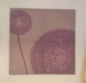 Purple dandelions picture for sale