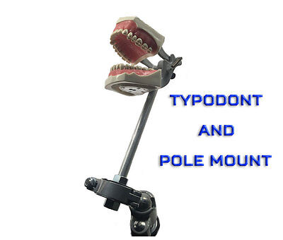 Dental Typodont Model 860 Plus Pole Mount Works With Columbia Brand Teeth