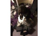 Missing Cat - West Hampstead!!