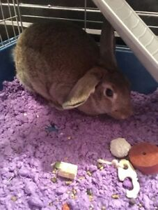 Rabbit for Rehome