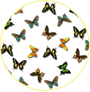 Butterflies Pretty Cute Car Tax Disc Holder - Fun Novelty REUSABLE Gift