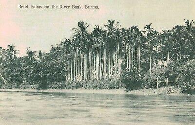 Burma,Betel Palms Along the River Bank,Southeast Asia,c.1909