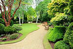 lawncare, treecare PRO many yrs. Hedge:Shrubs:Tree trim, remove