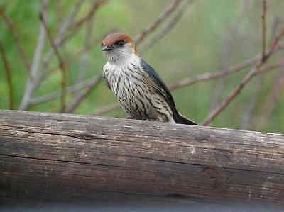 BROWSEBIRD