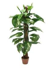 Pianta Artificiale In Plastica EUROPALMS Pothos tronco, 150cm