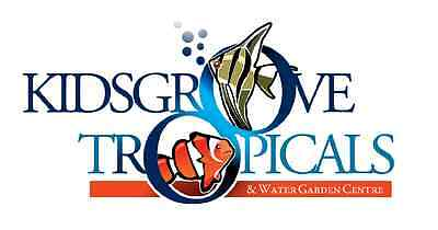 KIDSGROVE TROPICALS