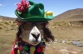 Llama Trading Co