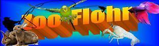 Zoo-Flohr