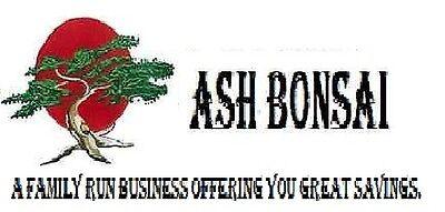 ASH BONSAI
