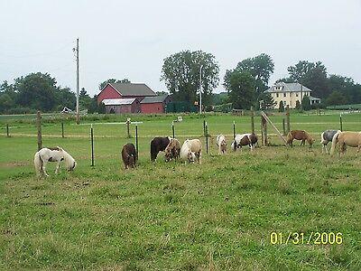 Whispering Windz Farm