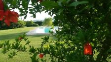 Capalbio,camere in country house,con piscina