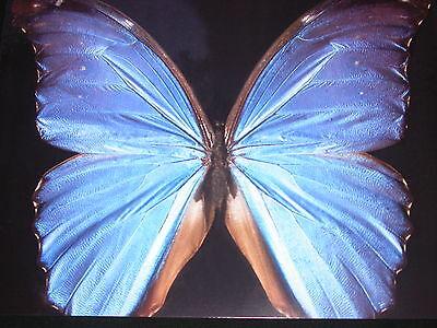 BlueButterflyCW
