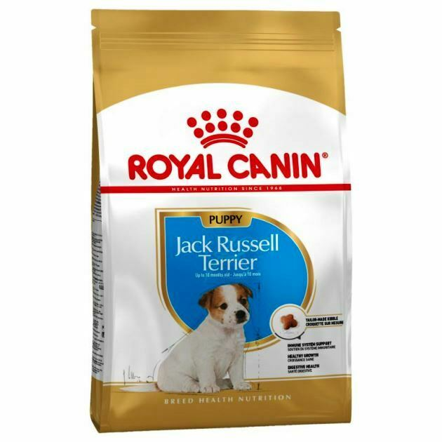 Jack Russell Puppy Royal Canin 500 gr