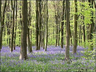 Bluebell Wood Craft Shapes