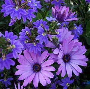 purpledaisys69