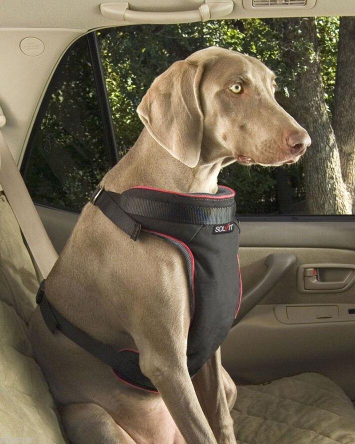 Large Breed Dog Car Harness