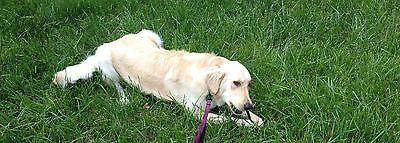joeydog2003