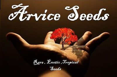 Arvice Seeds