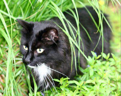 Happy Cat Garden
