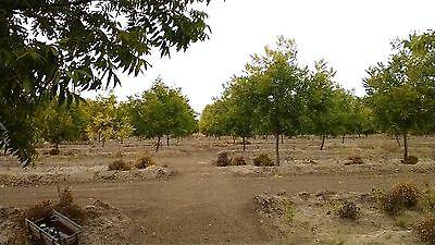 Castillo Organic Pecans
