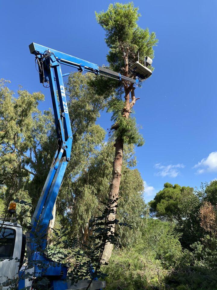 Abbattimento e Potatura alberi