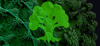 magic-broccoli