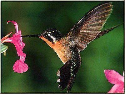 hummingbirdheartbeat2014
