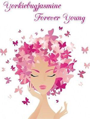 Yorkiebugjasmine Forever Young