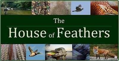 The-House-of-Feathers