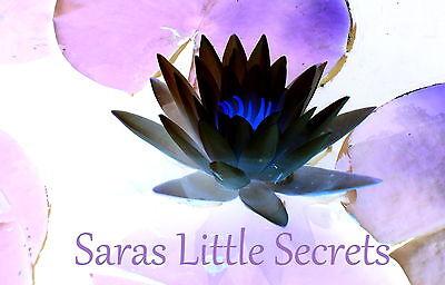 saraslittlesecrets