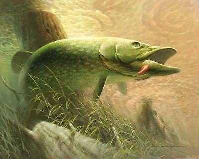 abigfishandtackle