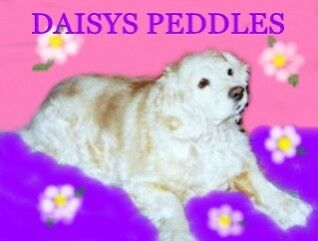 DAISYS PEDDLES CAMEOS and MORE