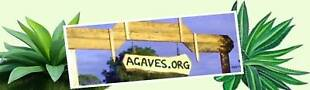 agave-plants-agaves-succulents-sale