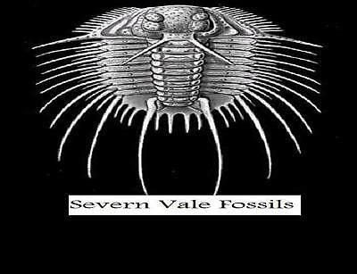 severn_vale_fossils