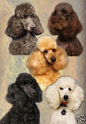 Poodle A6 Blank Card No 8 By Starprint